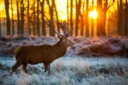 Kompakt-Jagdkurs für die Jägerprüfung im