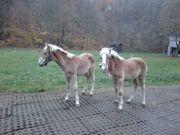 Pferdeboxen Stellplätze Pferdepension westlich von