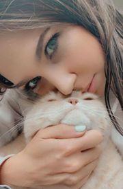 BKH Kitten in blau und