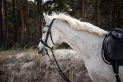 Pferd sucht netten Menschen - Reitbeteiligung