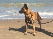 Wachhund Einzelhund Lebensstellung gesucht