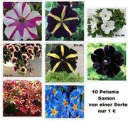 20 Petunie Samen verschiedene Sorten