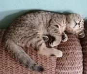 Kitten BKH abholbereit