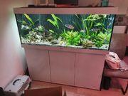Juwel 450 Aquarium