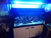 Meerwasser Aquarium 1 30m 0