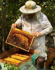 Bienenweide sucht Imker