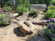 Biete Platz für Landschildkröten