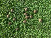 RESERVIEREN Griechische Landschilkröten - Schildkröten Babys