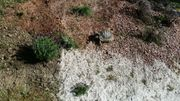 Landschildkröten Wasserschildkröten WhatsApp Gruppe