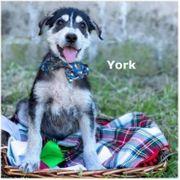 York sucht eine Familie