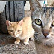 Nessa - soziale Katze die noch