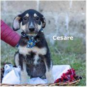 Cesare sucht ein Zuhause