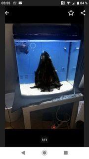 Meerwasser Aquarium ca 95 Liter