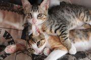Katzenbabys auf Körbchensuche