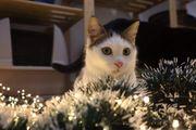 Katzenbub Donatello sucht Zuhause mit