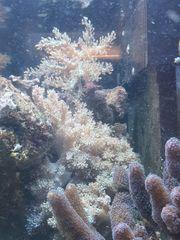 meerwasser korallen pilzleder krallen und