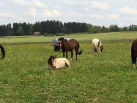 Bild 4 - Reitstall hat Pferdeboxen Stellplätze Offenstall - Opfenbach
