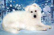 Hundetrainer Tierpsychologe Hundepsychologe Hundeerziehung Hundeverhaltenstherapie