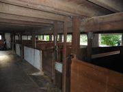 Pferdestall mit Reithallle hat freie