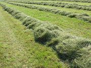 Suche Wiesen Ackerland zum Bewirtschaften