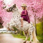 Pony Beritt