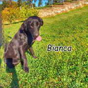 Darf Bianca Ihr Familienhund werden
