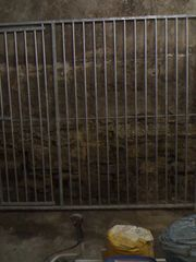 Hunde Trenngitter mit Tür Verzinkt