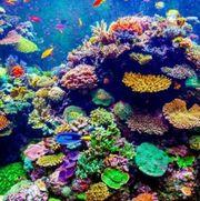 Meerwasser Korallen Wathsapp Gruppe