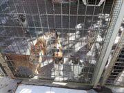 Sachspenden für unser Tierheim gesucht
