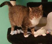 Katze Mura sucht ein schönes