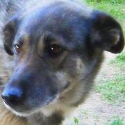 Bella geb 08 2011 lebt