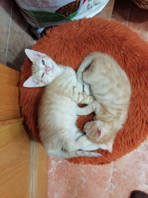 reserviert Mika und Yuki