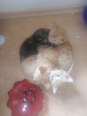 4 süsse Katzen