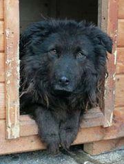 URSULINA - einsame Hundeseele - sehnt sich