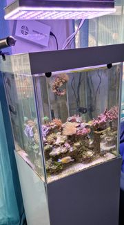 Meerwasseraquarium 250 Liter