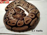0 1 Vanilla Adult von