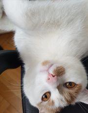 Kuschel Geschwister Katzen zu vergeben