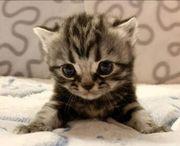 Suche Babykatze