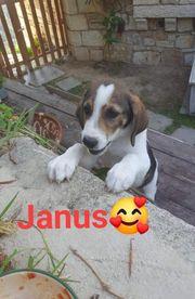 Süßer Janus