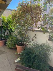 Terrasse Bepflanzung
