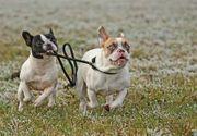 Hundeschule für alle Hunde im
