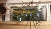 Palme und Kaktus