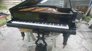 zu verkaufen Bluthner 1883 Klavier