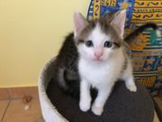 Katzenbabys 9 Wochen alt abzugeben