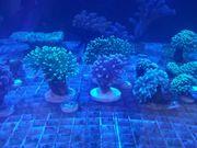 Meerwasserfachgeschäft Franken Corals FREITAG 10