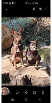 Hundebetreuung und Gassi Service