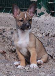 BRITA-Hundemädchen aus dem Tierschutz