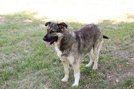Taiga - 4 weiße Pfoten suchen: Kleinanzeigen aus Kirchzell - Rubrik Hunde