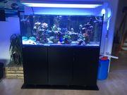 Meerwasseraquarium fast neu und mit