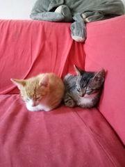 2 Kitten suchen ein schönes